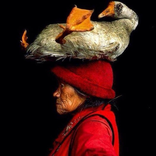 Chinese woman with her pet goose v23bu7