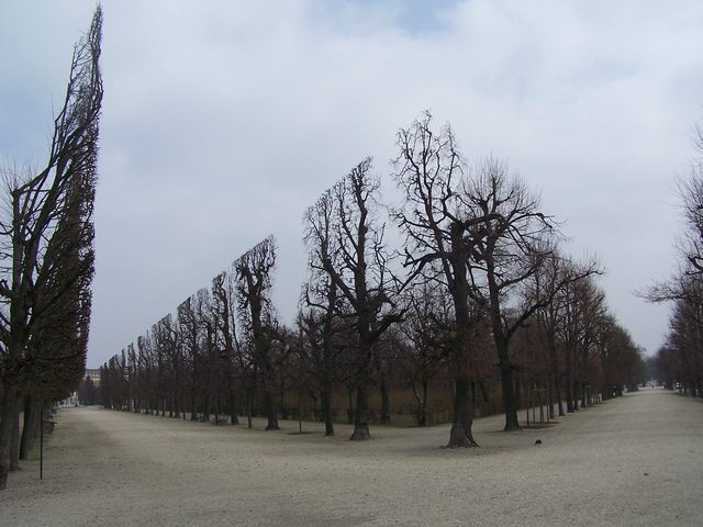 The trees in Schonnbrun n24a6