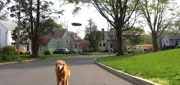drone walking dog