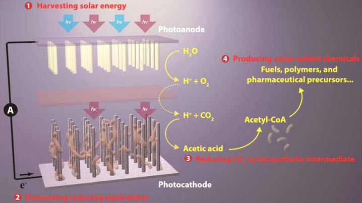 solar-powered-artificial-photosynthetic-approach