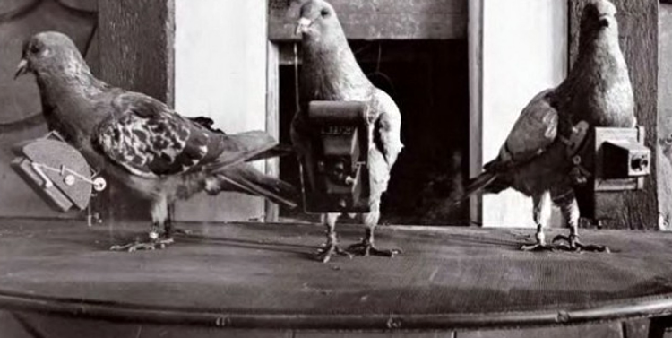 Pigeons-camera-or-wearables-camera-before-long-go-pro