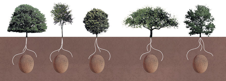 Clients will pick their favorite tree to be buried beneath