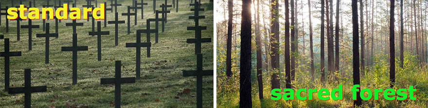 Instead of visiting a cemetery full of headstones, mourners would visit a sacred forest full of beautiful trees