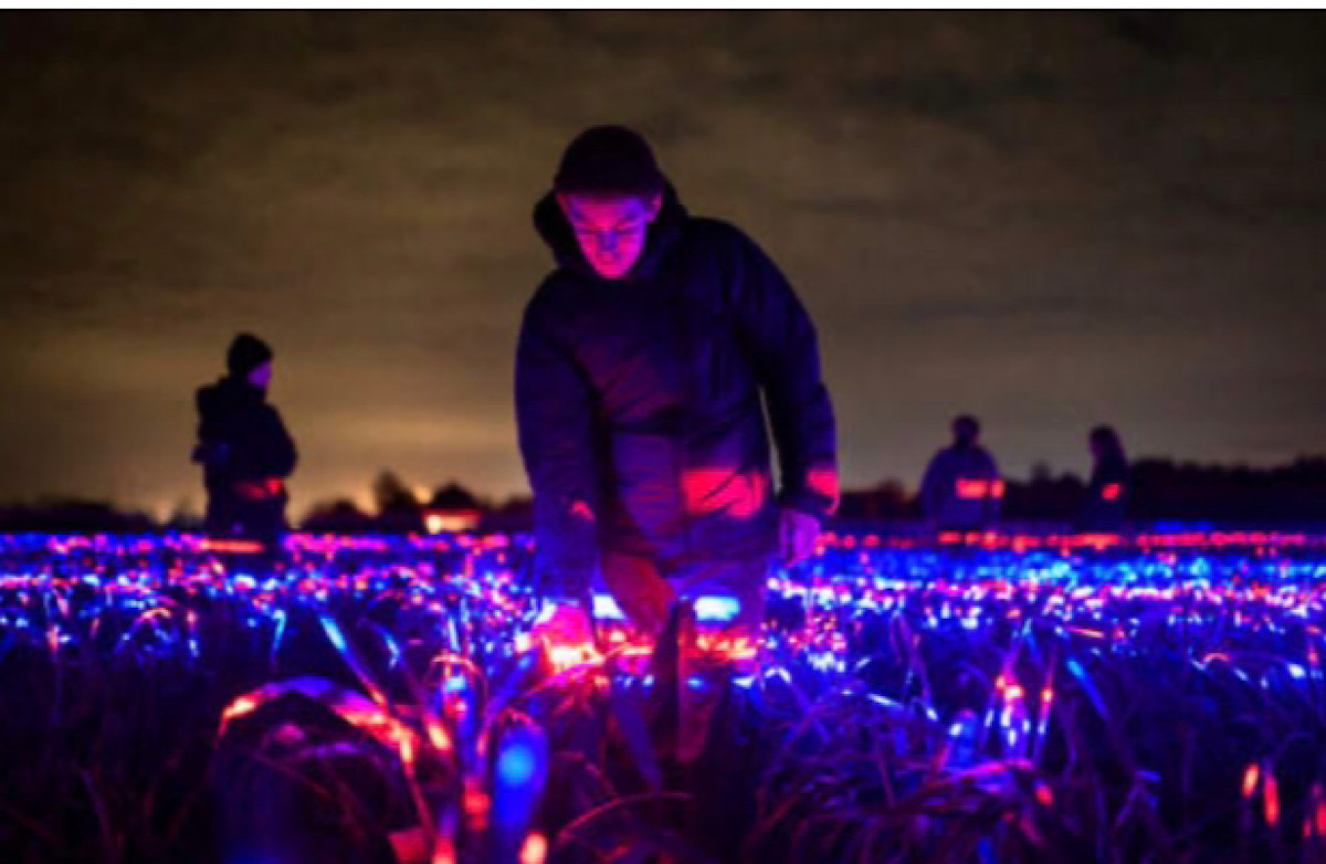 This stunning light display could make crops more sustainable