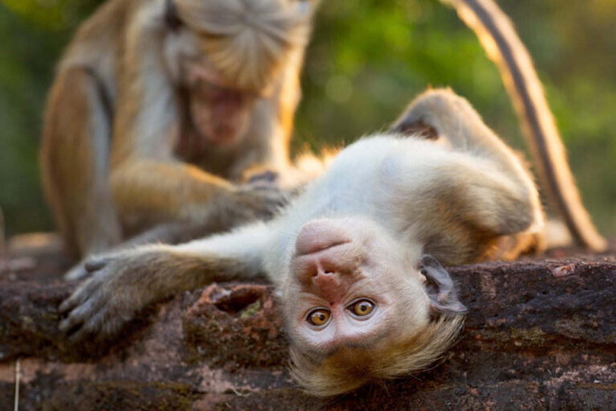 Scientists Have Just Successfully Made A Human-Monkey Hybrid