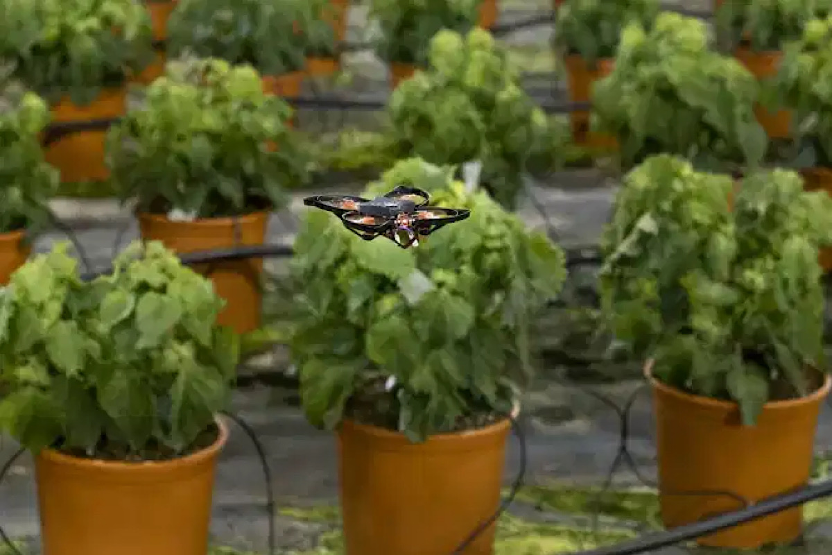 Drones vs. hungry moths: Dutch use hi-tech to protect crops