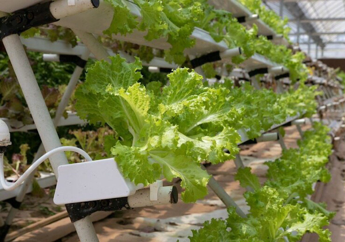 Inventing and scaling the world's largest urban vertical farming network