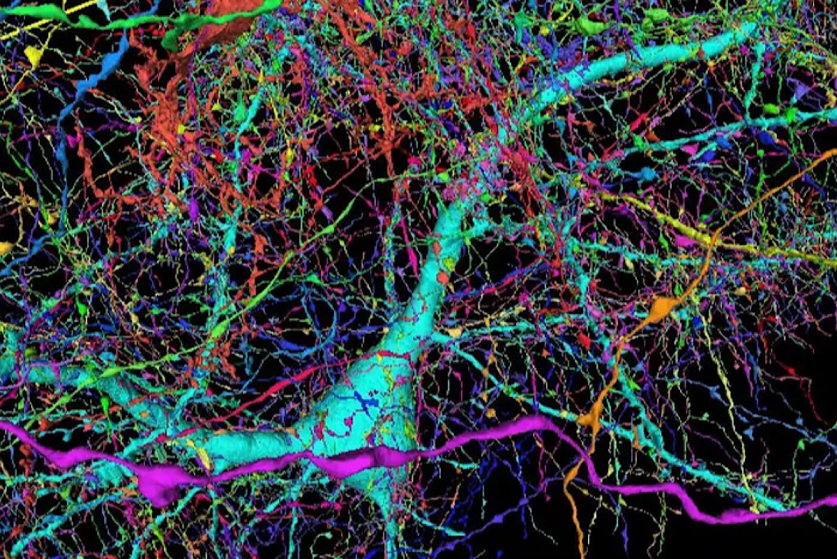 Google has mapped a piece of human brain in the most detail ever