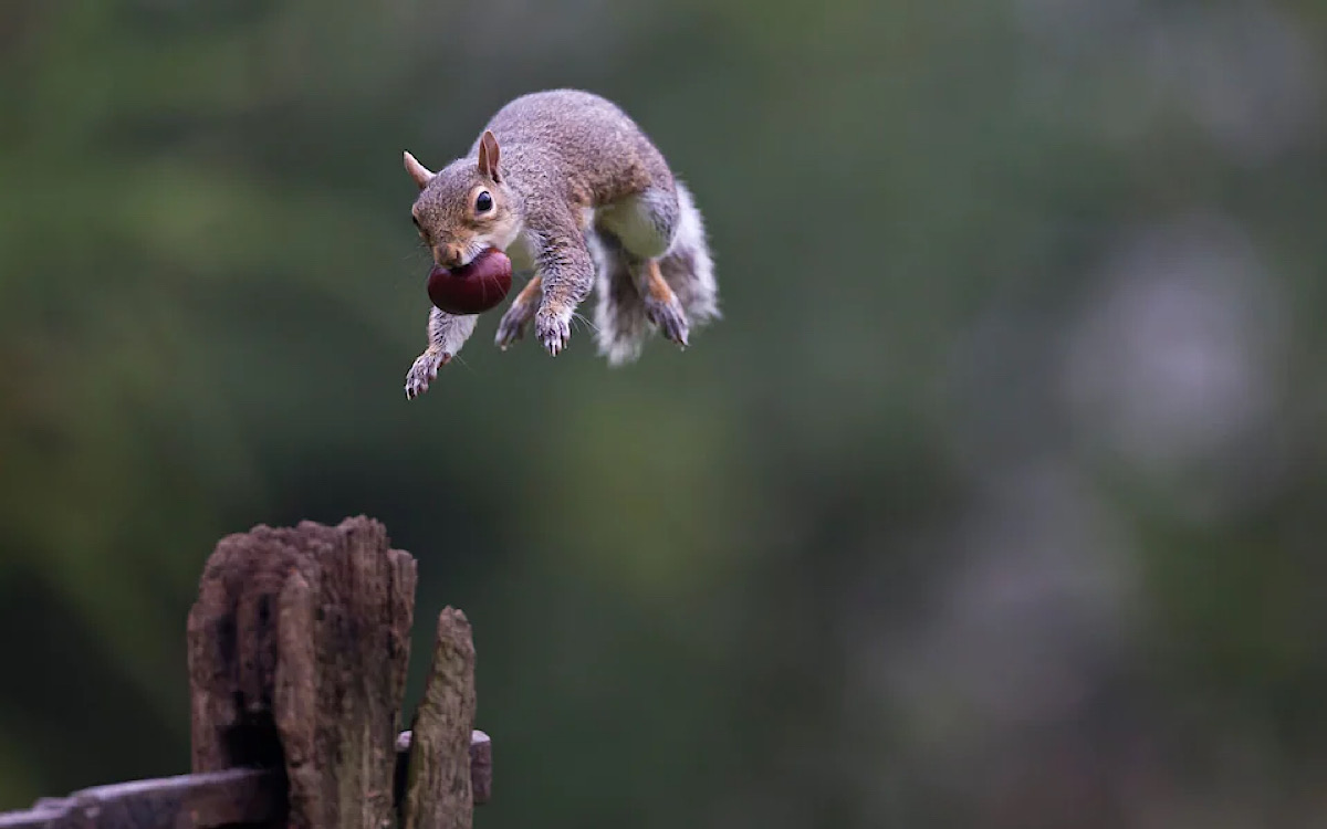 Science's next great leap: using squirrels to teach robots how to 'parkour'